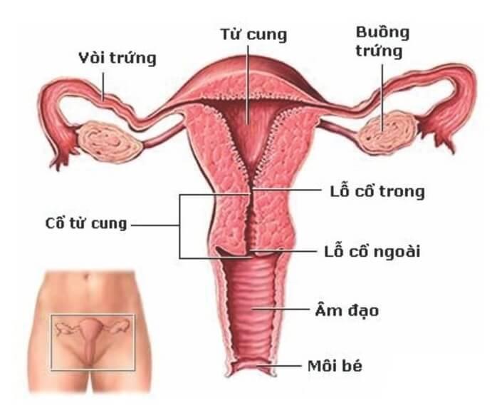 Các bệnh về tử cung phụ nữ thường gặp nhất