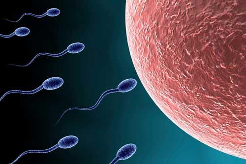 Sau quan hệ bao lâu thì tinh trùng gặp trứng?